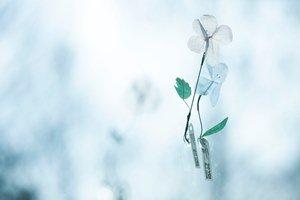 音の花束1.jpg